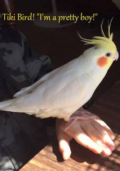 Tiki-bird2