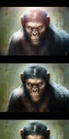 Monkey Process