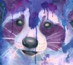 Purple Raccoon