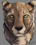 A quick cheetah