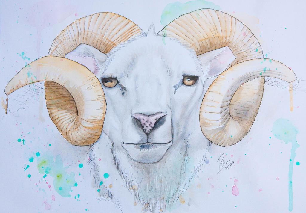 Ram ahead by petrunsig
