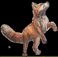 Red fox by LittleVulpine