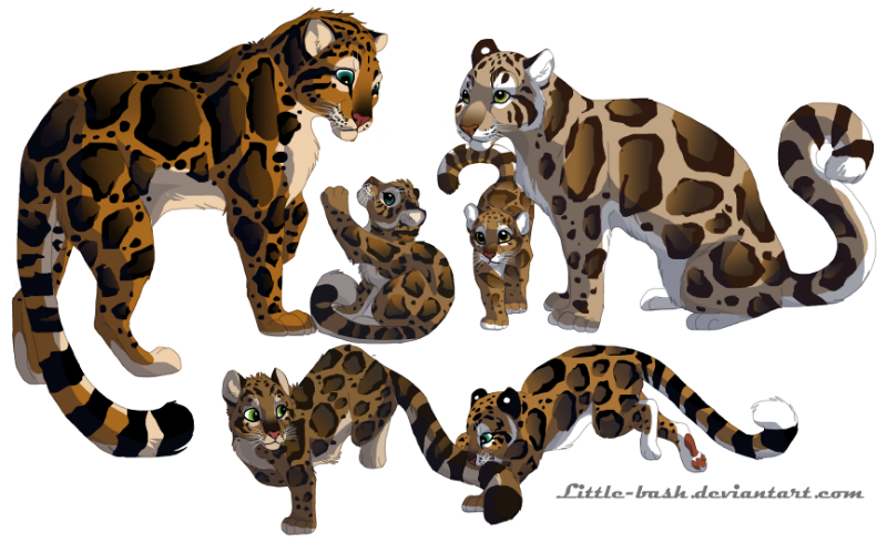 Clouded Leopard Family-Commission by DancingfoxesLF