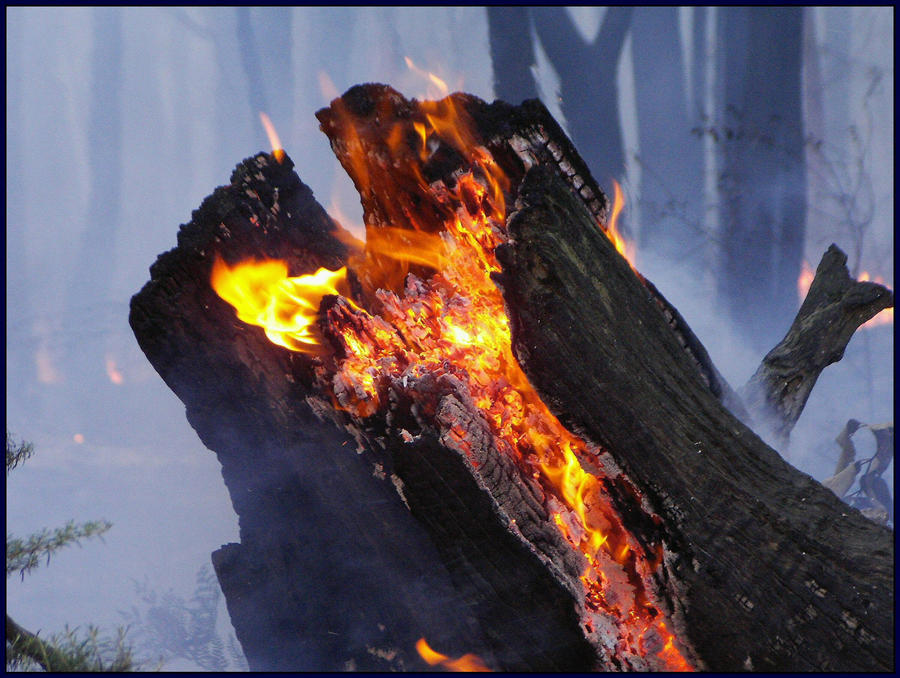 BURNING STUMP by TrueTaurean