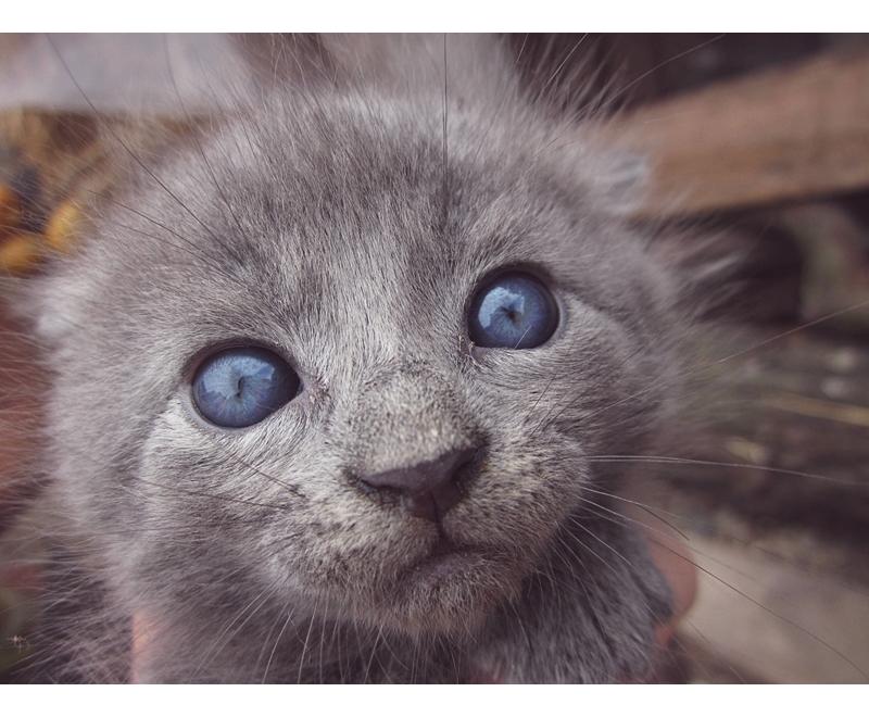 Blue eyes by sweetshadow89