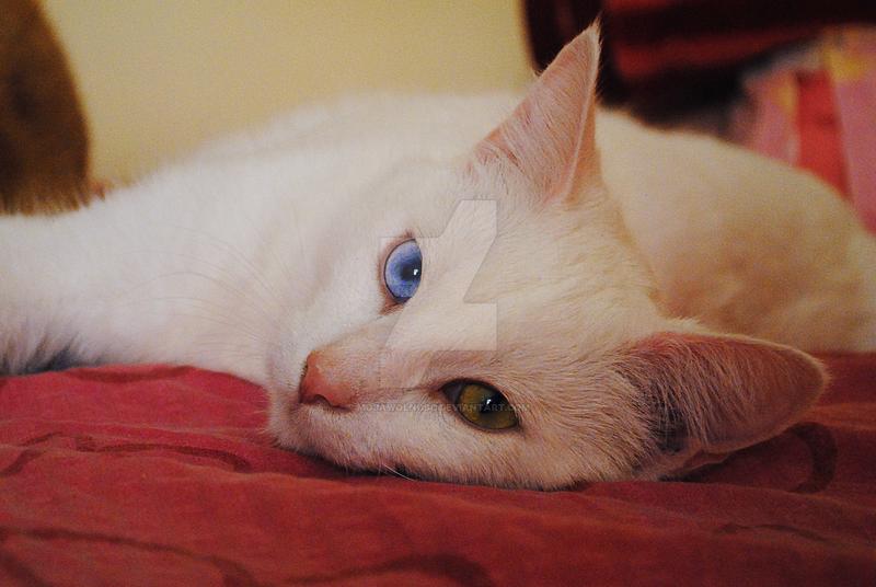 Kitten by mojawolnosc