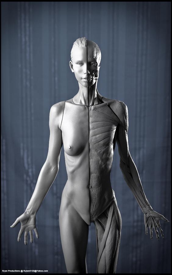 Female Anatomy by SybexMed