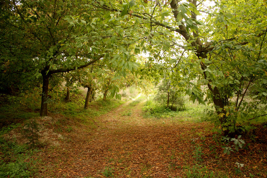 Fall by huginswarrior