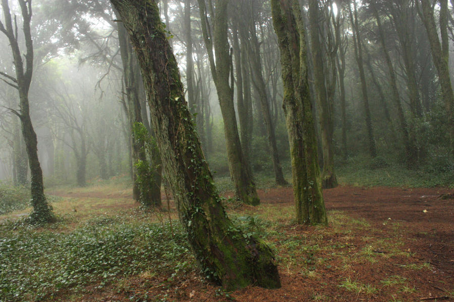 Forest 3 by huginswarrior