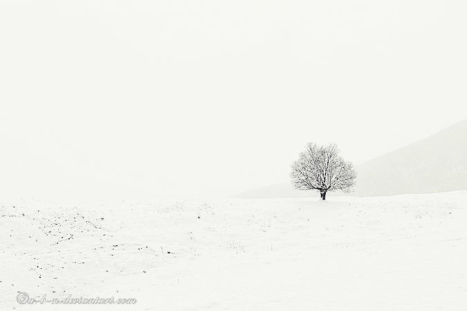winter tree by a-b-n