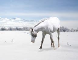 Snowdrifts | TRADE by ballare