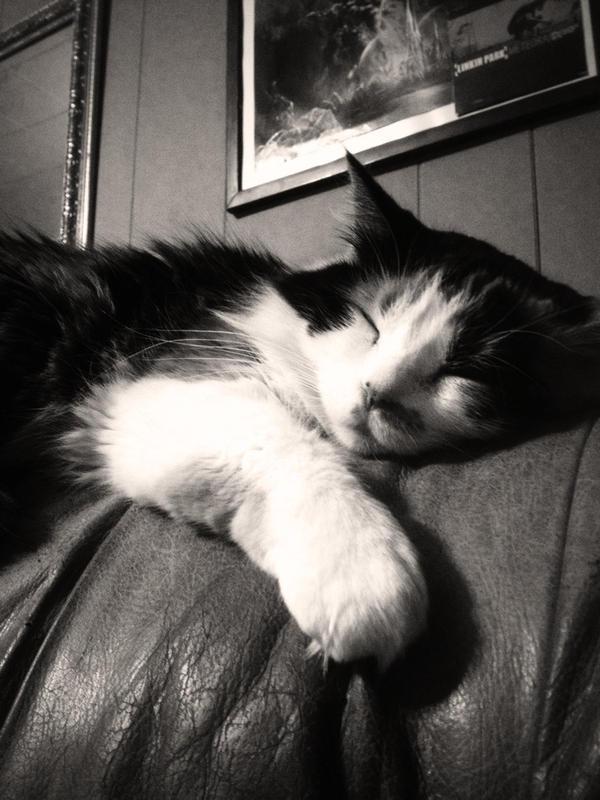 sleepy time kitty