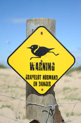 warning birds by manzin