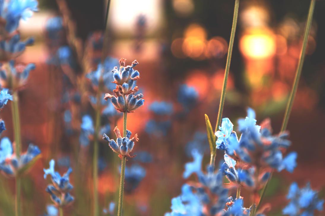 Flora summer by stefanbottomley