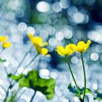 1542 - Yellow Flower Dance