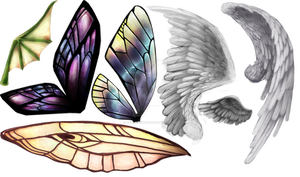 Wings of different colours
