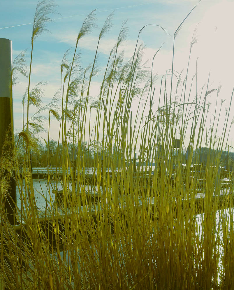 AM HAFEN by photographiclady