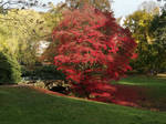 RED TREE 2020