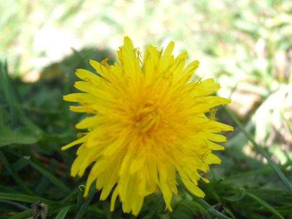 Flower Pt. 1