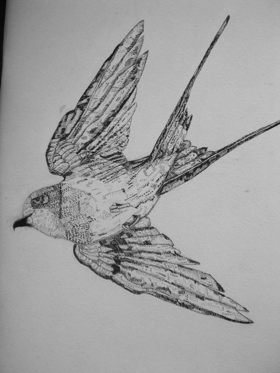 Swallows drawing