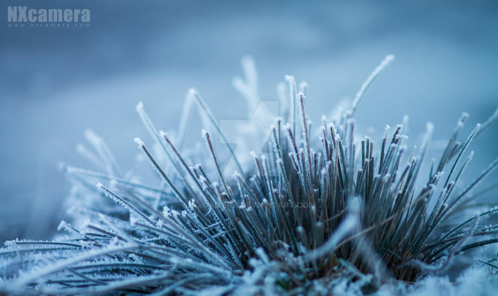 Frozen by NXcamera