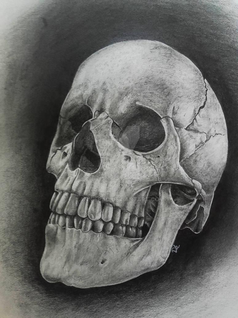Realistic SKULL in graphite
