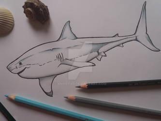 Great White Shark - sketch
