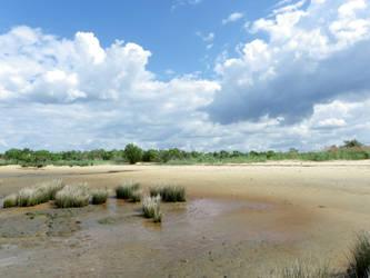 Le Teich 1 by Flomyen