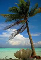 Desert island by Pecetta