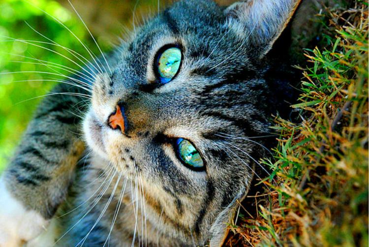 keep cats off garden fence