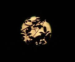 Night on Earth by Ninquelen