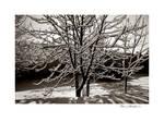Snow Fantasy 11 A by DanStefan