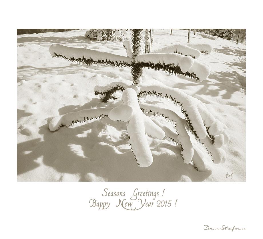 Seasons Greetings  - HNY 2015 by DanStefan