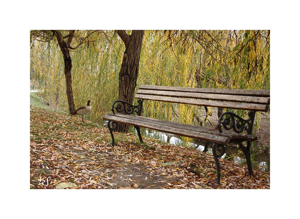 Autumn Feeling 14 by DanStefan