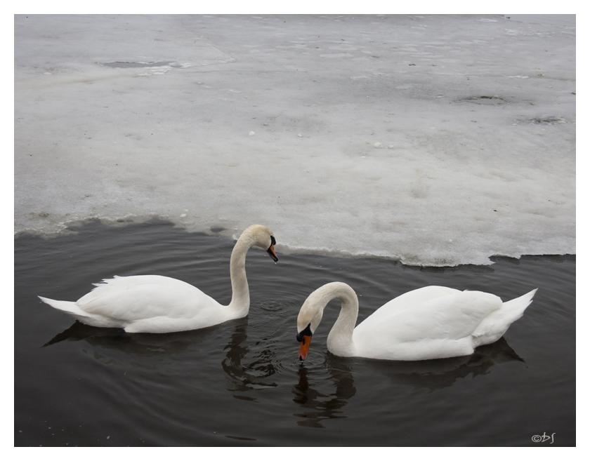 end of winter by DanStefan