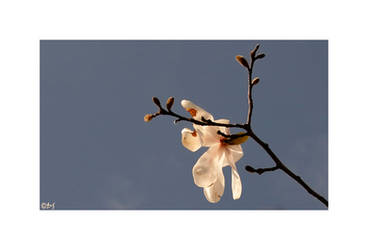 Spring A New Beginning by DanStefan