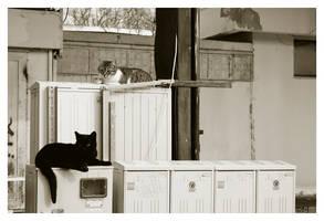Cats Lounge by DanStefan