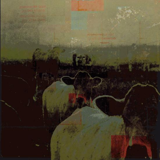 ah la vache - encore by laflaneuse