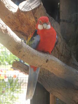 Red friend
