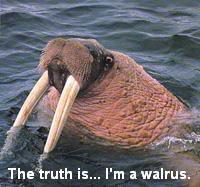 Gracie, walrus by phewly
