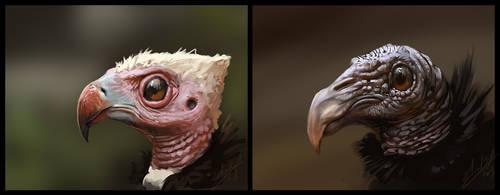 Two Vulture Bird Practice by AssasinMonkey