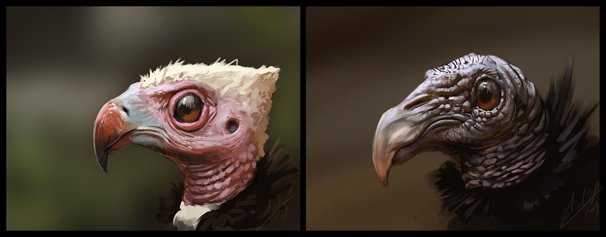Two Vulture Bird Practice