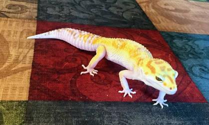 ~ Hello EVERYONE!... Meet PASTEL! ~ by suziewinkler