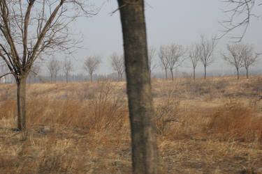 The Desolation of Smog by vrihet
