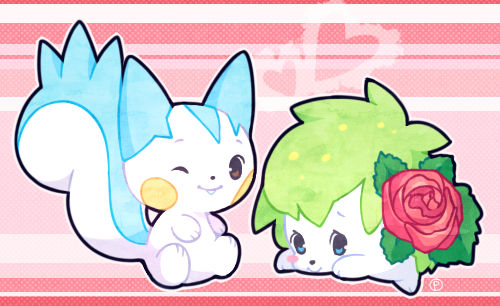 pachi pachi and rose