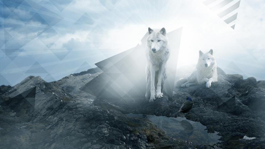 wolfs by BONBON-O