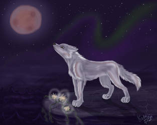 White wolf by Ketty-lioness