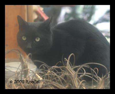 RooCat's Profile Picture