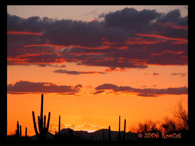 Almost Spring Saguaro Sunset by RooCat