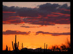 Almost Spring Saguaro Sunset